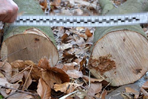 wypadek_przy_wycince_drzew.jpg