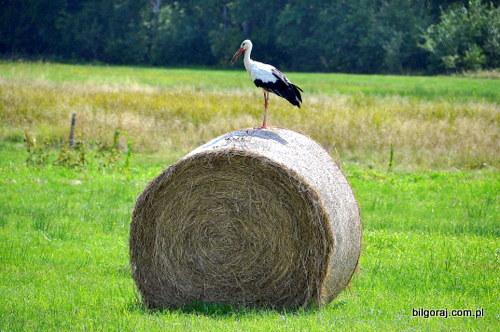 rolnictwo_bilgoraj.JPG