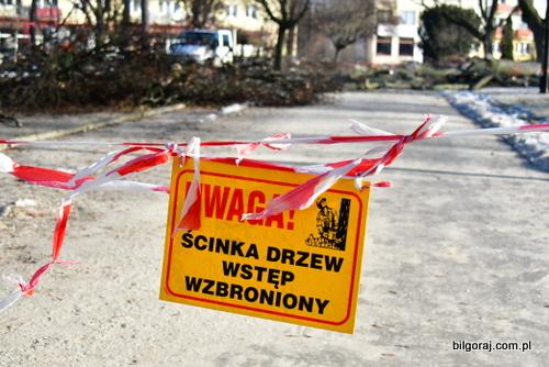 rewitalizacja_wycinka_drzew_bilgoraj.JPG