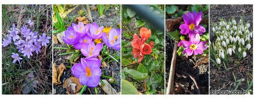 zima_kwitna_kwiaty.jpg