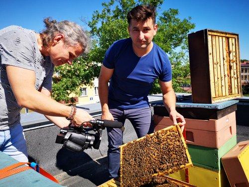 pszczoly_na_dachu_bck.jpg