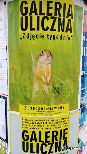 galeria_uliczna.jpg
